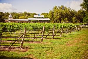 Vintage Oaks Vineyards