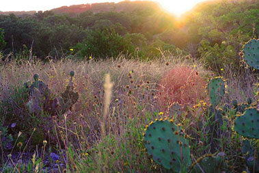 voscroll_0028_Canyon_view_cactus